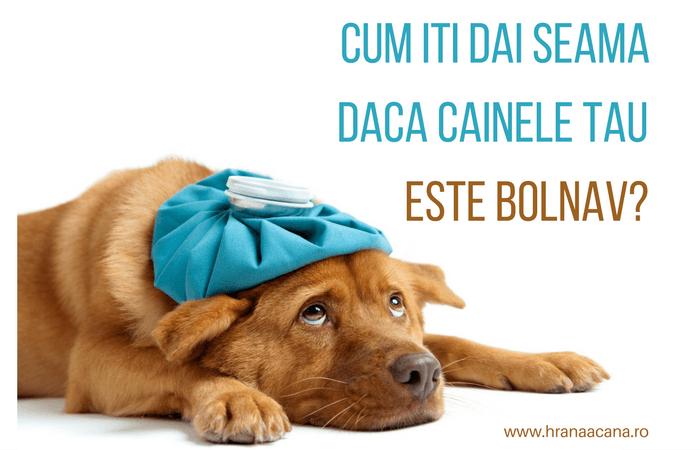cum să-mi ajut beagle să slăbească tabara de slabire portugal
