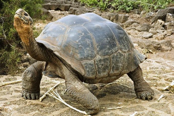 țestoasele pot pierde în greutate 6 sfaturi de pierdere în greutate săptămânal