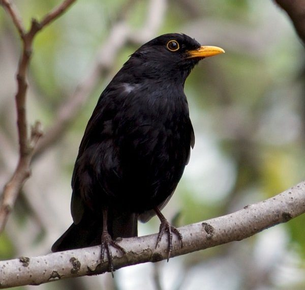 pierderea în greutate a omului de păsări