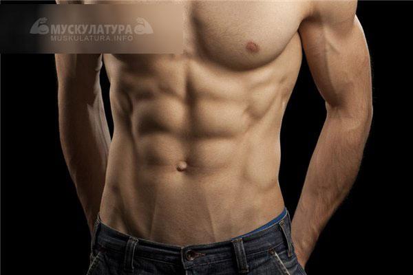 pierdeți în greutate sau centimetri genetica pierderii de grăsime