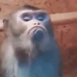 maimuță de slăbit mcdonalds ceo slăbire