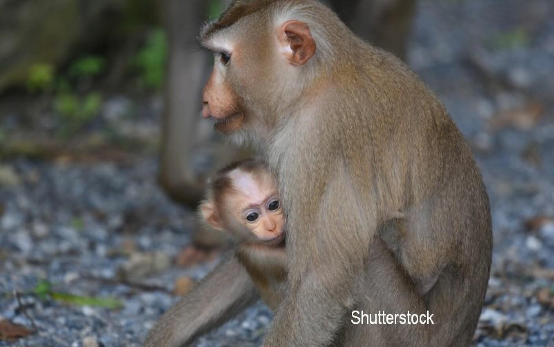 maimuță de slăbit ajuta cu pierderea in greutate langa mine