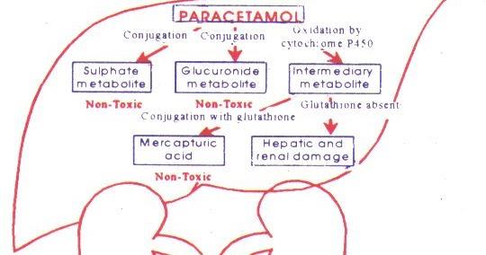 paracetamolul te face să slăbești