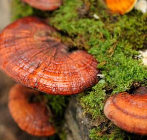 matake ciuperci pentru pierderea în greutate)