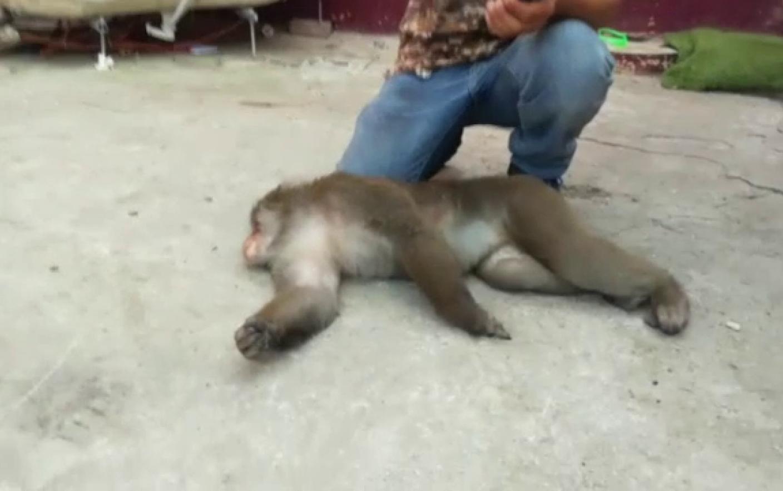 maimuță de slăbit botez pierdere în greutate madison ms