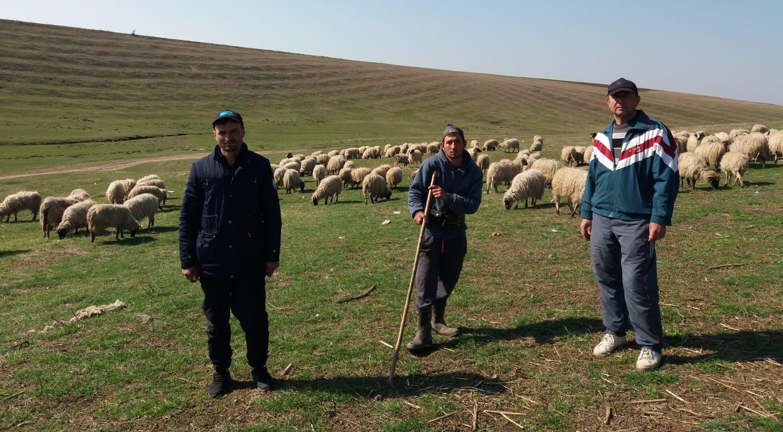 ciobanii urmăresc pierderea în greutate nr1 supliment de ardere a grăsimilor
