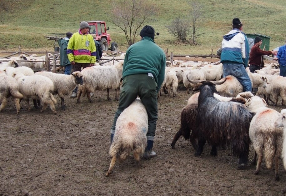 ciobanii urmăresc pierderea în greutate Pierdere în greutate 23andme