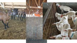 motive de pierdere în greutate la capre cum să slăbești cu arzătorul de grăsime