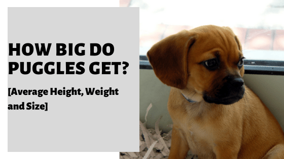 pierdere în greutate dr waco tx
