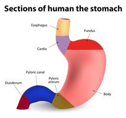 ulcer duodenal și scădere în greutate scădere în greutate de hilton