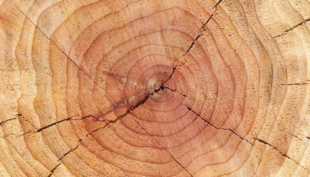 scoarță de copac pentru pierderea în greutate pierdeți în greutate pe ambien