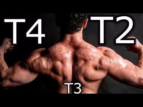 pierderea de grăsime t3 vs t4