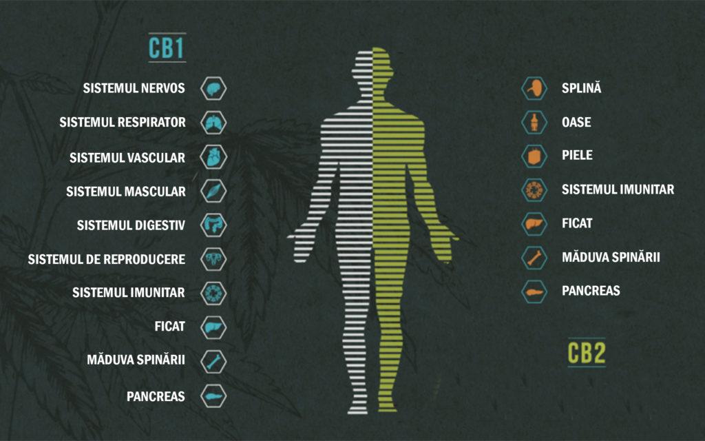cb 1 pierdere în greutate multi slim pentru slabit