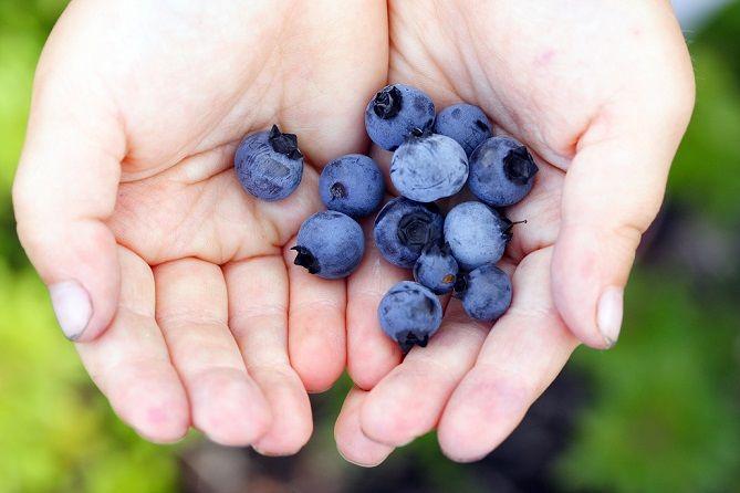9 fructe care te ajută în procesul de slăbire - CSID: Ce se întâmplă Doctore?